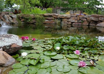 Pond Waterfall Lilly Pad