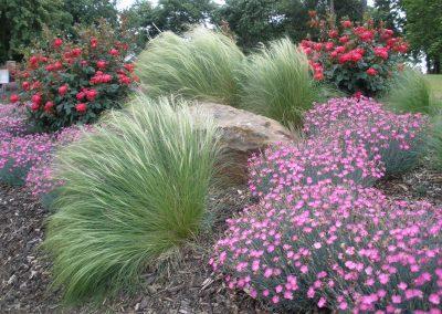 Mexican Feathergrass 15